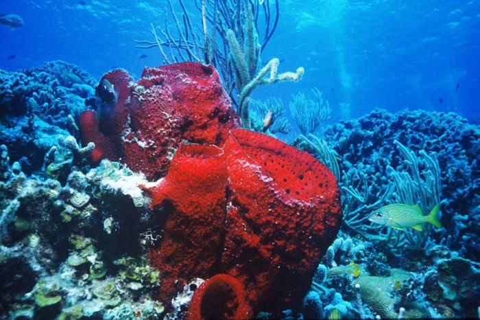 Arrecife coralino en Cozumel.