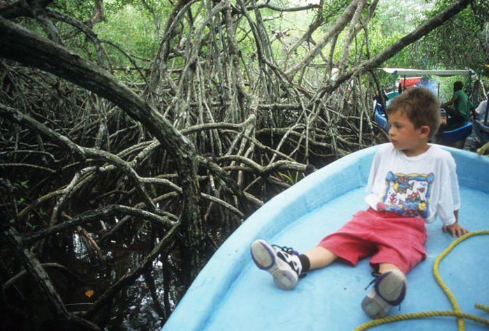 Canales entre los mangles. Tecolutla.