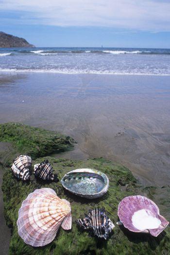 Caracoles en playa del Pacífico.