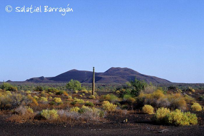 Desierto de matorrales y cactus. Sonora.