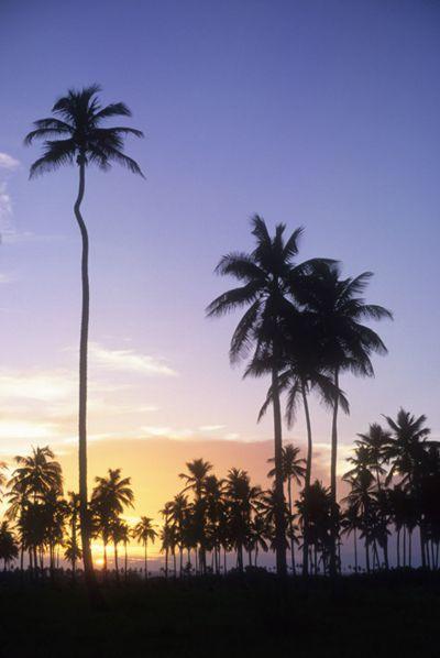 Palmeras en Costa Esmeralda. Tecolutla.