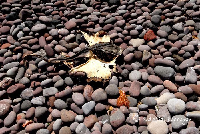Rocas en playa de Isla Tiburón y resto de pez