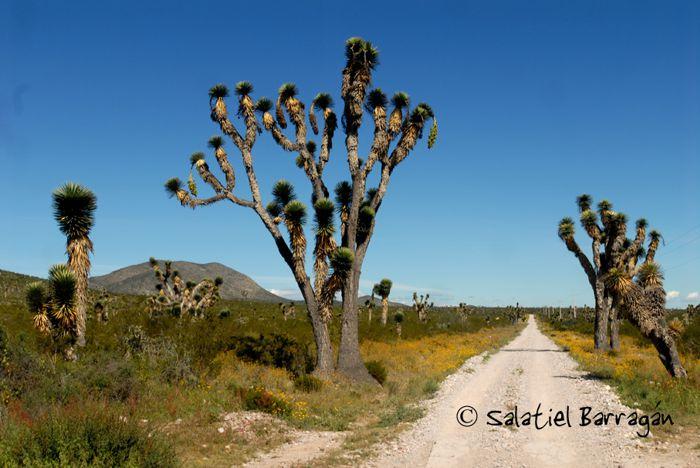 Ruta Wiricuta camino en Bernalejo y yucas