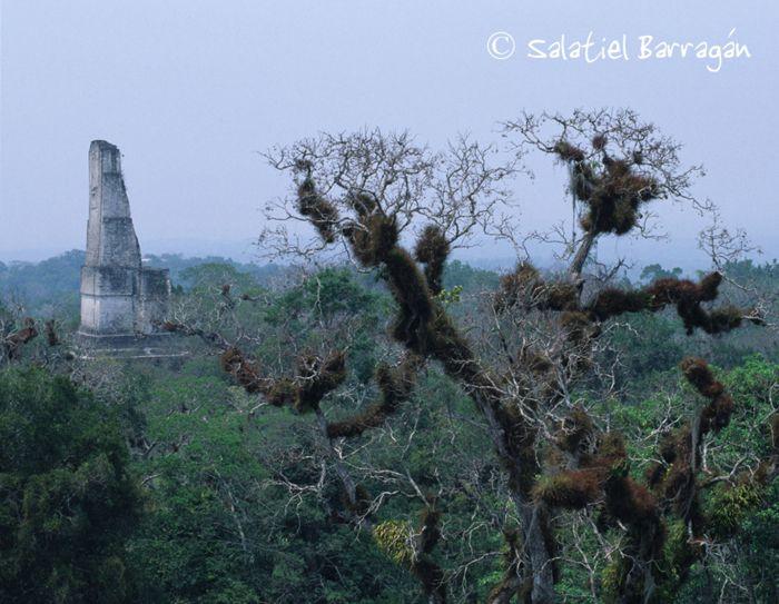 Tikal estructura espigada entre al selva