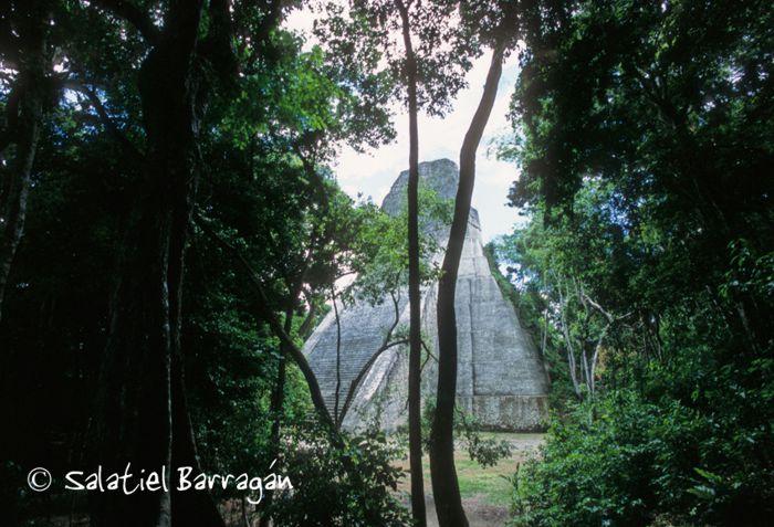 Tikal, pirámide entre la selva
