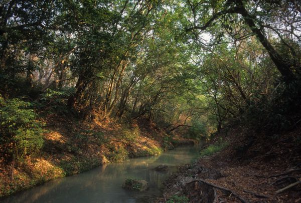 Río Florido en ejido Las Palmas, en la base este de Abra Tanchipa.