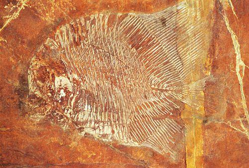 Fósil de pez en Tlayúa, Puebla