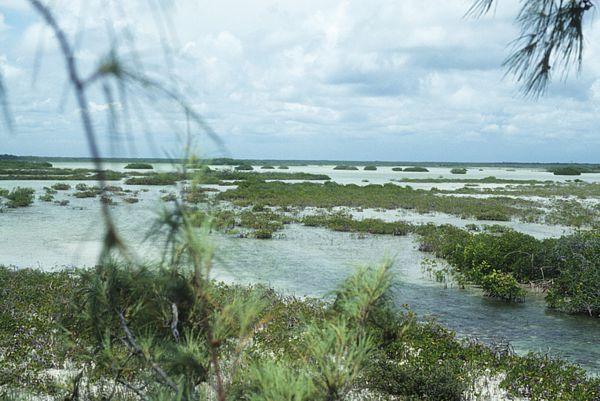 Extensas tierras inundables con mangles y mogotes en Sian Ka'an.