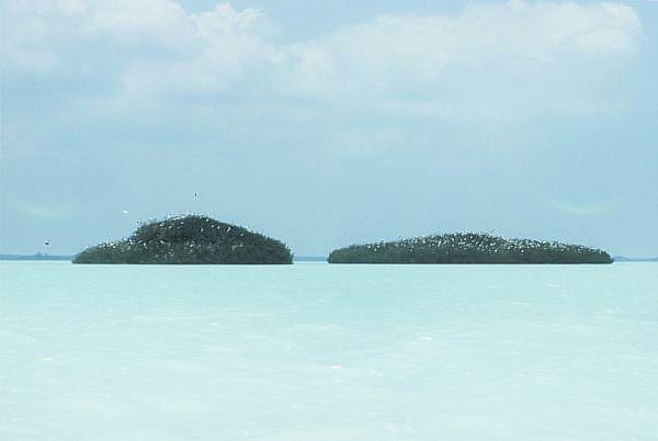Aguas bajas casi blancas e islas Xobón de mangle en centro de Sian Ka'an