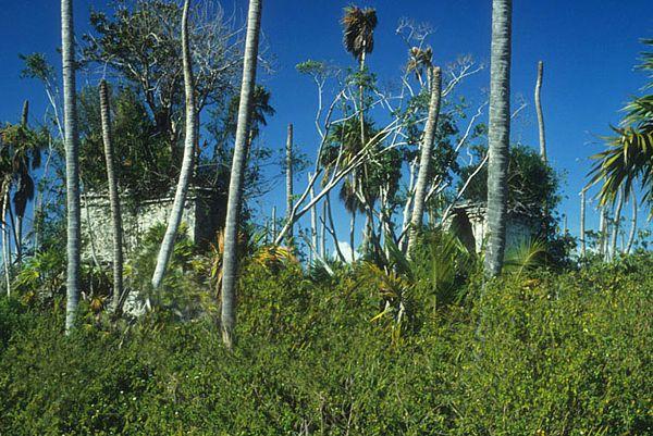 A lo largo de costa de Sian Ka'an, posibles faros o vigías en sitios mayas como Xamach