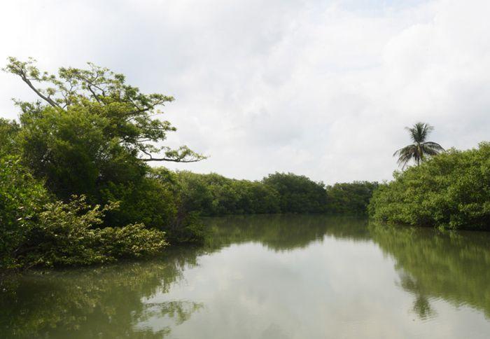 Río Tumilco para observar aves, cocodrilos, cangrejos y pescar.