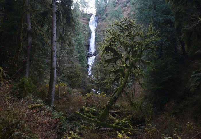 Arboles con musgo y cascada en Munsen Creek Park, cerca de Tillamook.