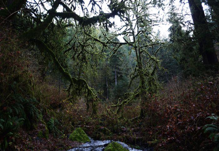 Bosques y arroyuelos de Oregón donde se dice habita Pie Grande.