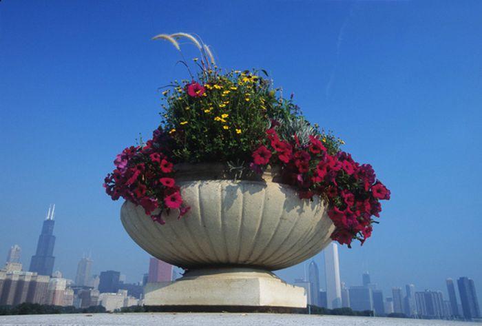 Flores de verano y edificios de Chicago desde zona de museos.