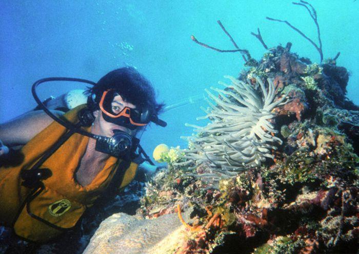Buceo en el Caribe la 2a barrera arrecifal más grande del mundo