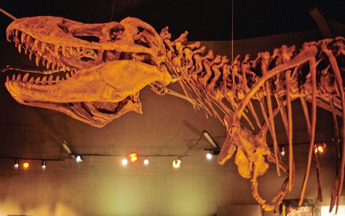Saltillo. Museo del Desierto con esqueleto de T-Rex