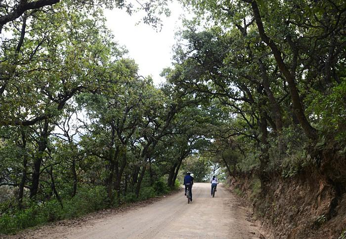 Camino de Santa Rosa y encinos en la Sierra de Guanajuato