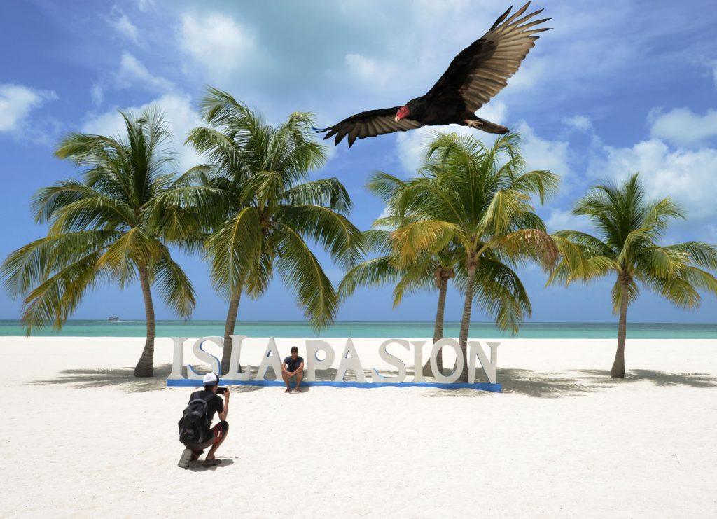Zopilote. Festival de las aves en Cozumel